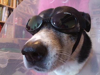 כלב מגניב