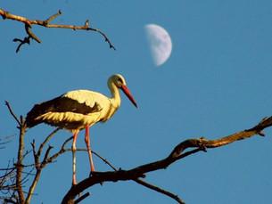 """9 de Mayo """"Día internacional de las Aves"""""""