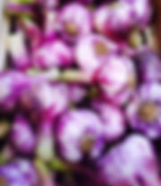 Fresh French Violet Garlic