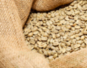 unroasted-whole-coffee-beans-before-roasting-flavor-greenwood-de