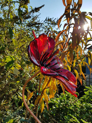 red garden poppy.jpg