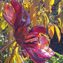 garden poppy red.jpg