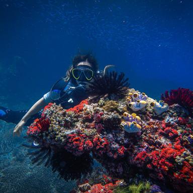 Pristine corals - Solomon Islands