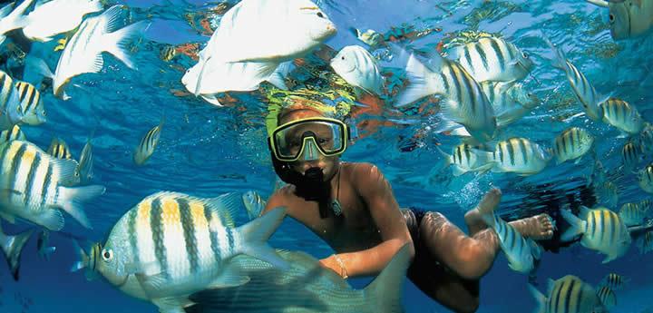 DSC - snorkeling