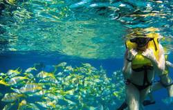 fish snorkeler