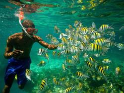 fish-snorkel