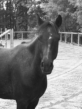 cheval2_edited.jpg