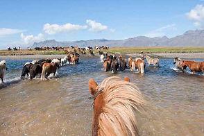 chevaux entreprise.jpg