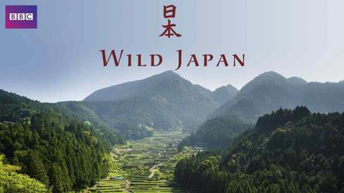 wild japan.webp