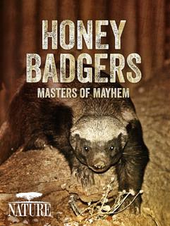 Honey Badgers.jpg