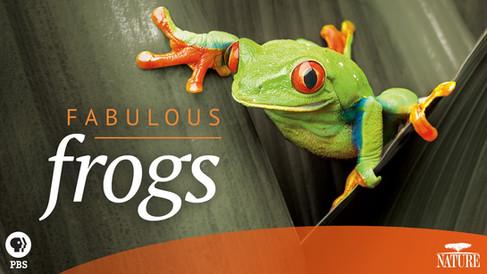 fabulous frog.jpg