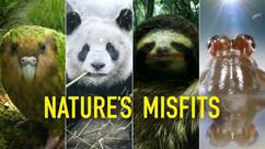 Nature Misfit.jpeg
