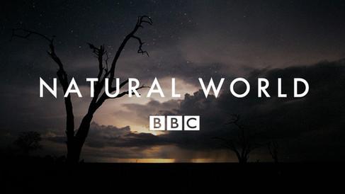 Natural-World-BBC.jpg