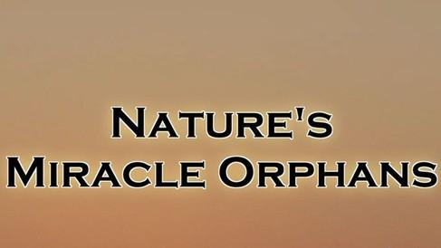 Nature_s_Miracle_Orphans.jpg