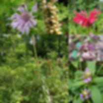 Woodland Garden  Stockbridge, MA.jpg