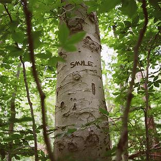 Smiletree.JPG