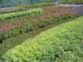 plantes de terrain sec 2.JPG