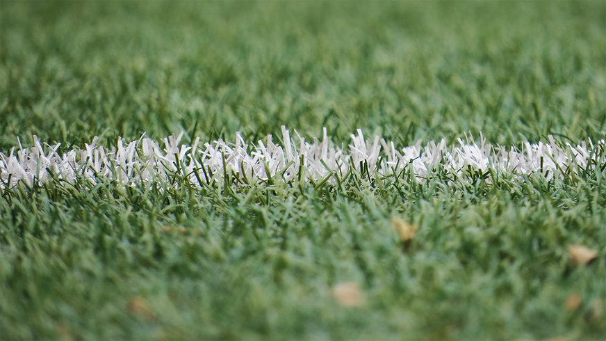 grass-grassland-54567.jpg