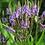 Thumbnail: Ijzerhard - Verbena officinalis 100gr