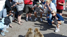 Tourist sexually assaulted, by monkeys?