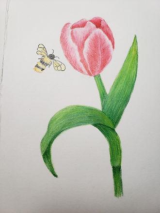 Tulip Linda McClure.jpeg