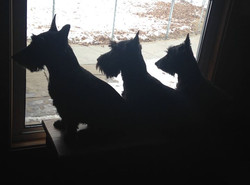 Silhouettes...Rudy, Angus & Lucy