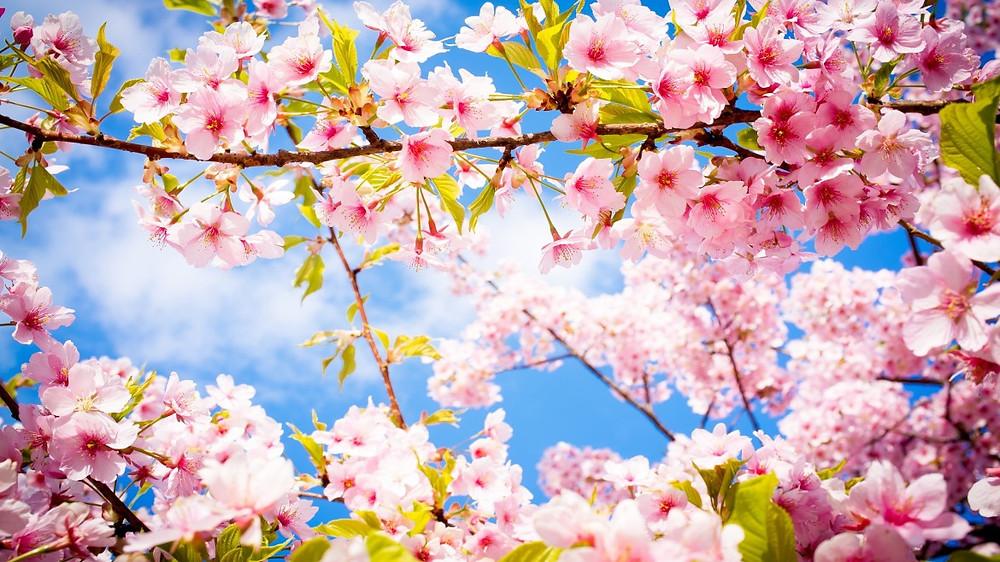 On alanud Kuldajastu Kevad!
