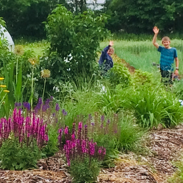 The Perennial Gardens