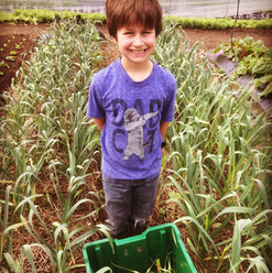 Asher and the garlic scapes