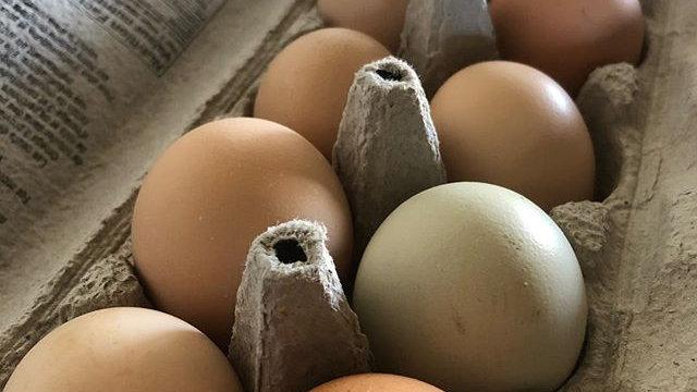 Pastured Chicken Eggs