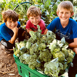 The boys and their broccoli harvest