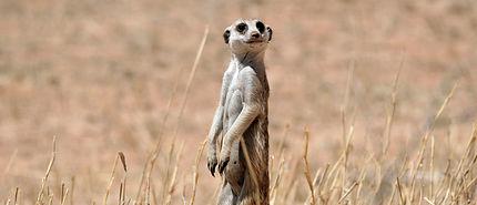 Merubisi_Safaris_Central_Kalahari_Game_R