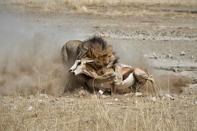 Merubisi_Safaris_Carnivore_Tracer.JPG