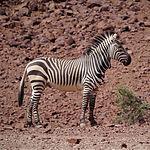 Namib Fascination_edited.jpg