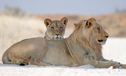 Merubisi_Safaris_Kgalagadi_Transfrontier