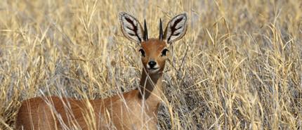 Merubisi_Safaris_Okavango_Delta1