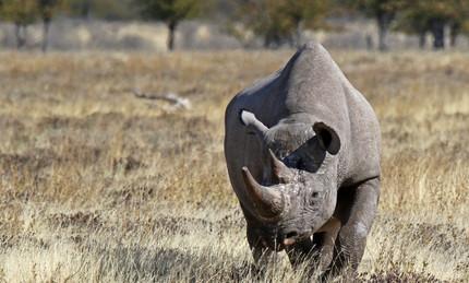 Merubisi_Safaris_Khama_Rhino_Reserve