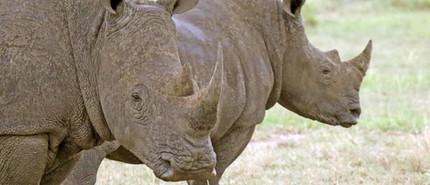 Merubisi_Safaris_Khama_Rhino_Reserve.JPG