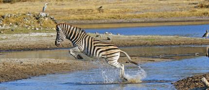 Merubisi_Safaris_Makgadi _Nxai_Pan.JPG