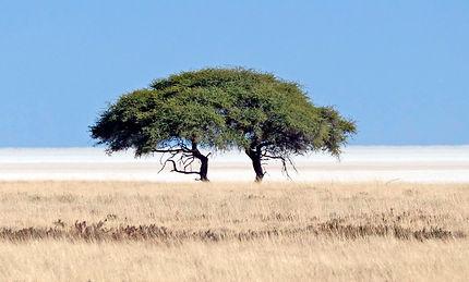 Merubisi_Safaris_Etosha_National_Park.JP