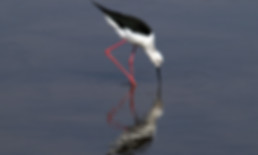 Merubisi_Safaris_Nata_Bird_Sanctuary.JPG