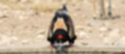 Merubisi_Safaris_Raptor_Chase.JPG