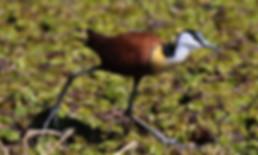 Merubisi_Safaris_Lake_Ngami_Maun.JPG