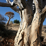 Namib Fascination Extended.JPG