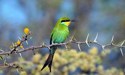 Merubisi_Safaris_Caprivi_Strip.JPG