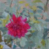 Portrait of a dahlia.jpeg