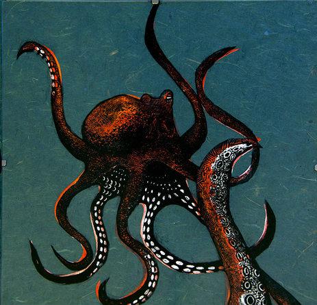 Octopus vulgaris - encre grattée sur verre 24x30