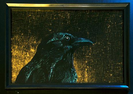Corvus corone - Encre grattée sur verre 29,7x21