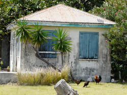 Traditional Anguillan house