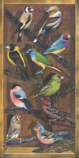 Finches of the World, Bird Print